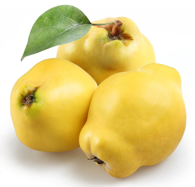 성질이 따뜻한 모과