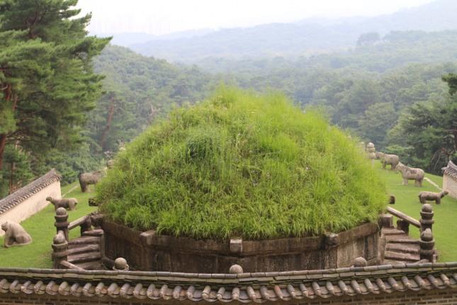 고향의 억새풀을 머리에 쓰고 내려다 보고 있는 건원릉.
