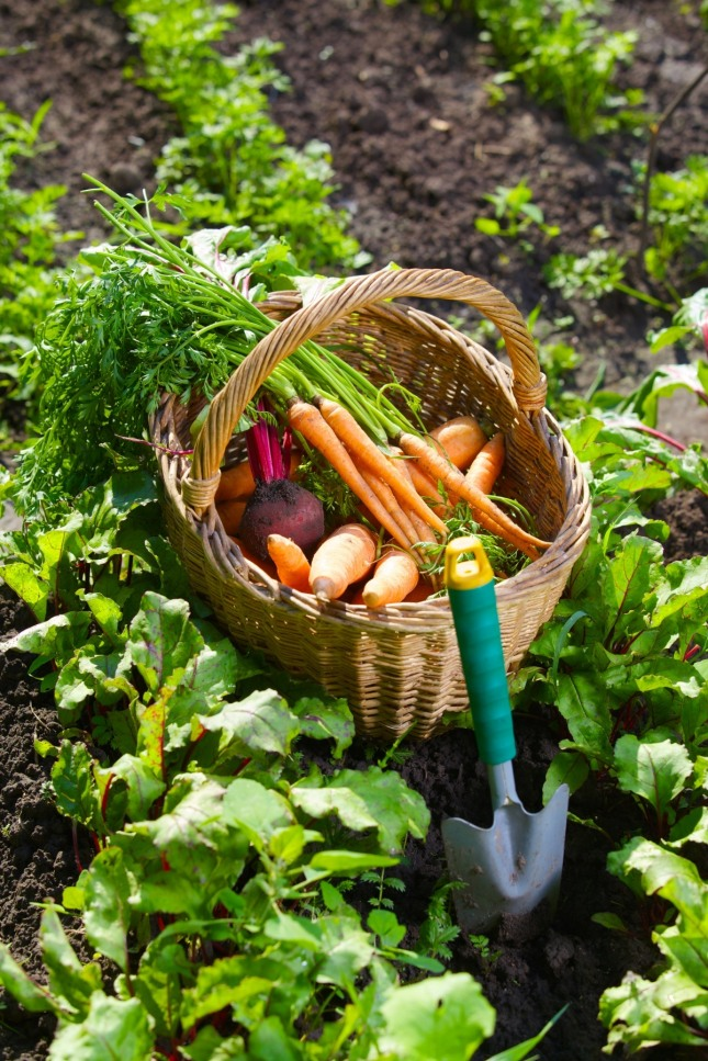 농사에서 종자가 원인이고 토양, 자양분, 비료, 노동력, 온도, 수분 등의 조건은 연인데, 인과 연이 상화 작용하여 결과를 만들어낸다. /자료=글로벌이코노믹