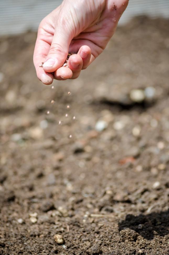 봄에 씨앗을 뿌리고 여름에 잘 가꾸어야 가을에 결실을 맺는다. 인생도 마찬가지다. 자료=글로벌이코노믹