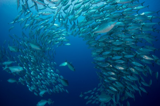 물고기를 잡아먹자고 주장하는 사람을 보거나 잡은 물고기를 요리해 먹는 꿈은 귀인의 도움을 받거나 이득이 얻어지게 된다. 자료=글로벌이코노믹